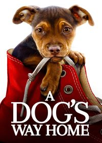 Watch A Dog's Way Home 2019 movie online, Download A Dog's Way Home 2019 movie